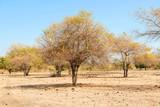 Scenery of Savanna on Doro Ncanga