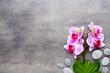 Leinwanddruck Bild - Beauty orchid on a gray background. Spa scene.