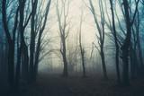magical woods, fantasy landscape - 229145642