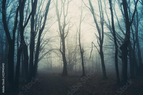 magical woods, fantasy landscape