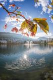 Springtime in Bergen, Norway - 229146872