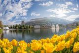 Springtime in Bergen, Norway - 229147019