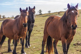 Wild horses in the mountain