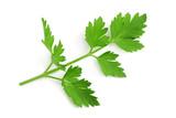 Fresh parsley sprig - 229169280