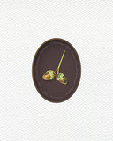 Illustration with oak acorns  painted  with colored pencils. Autumn element for creating prints on clothes, textiles, for invitation or poster design. - 229181857