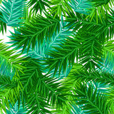 Green succulent fir branches seamless pattern on white - 229186286