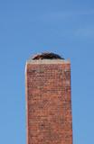Verlassenes Storchennest auf dem Schornstein