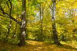 nice autumn forest - 229194298
