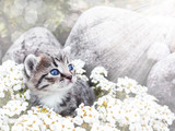 Cute little kitten sitting among the white flowers and stones