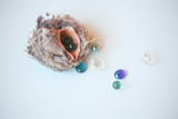 a seashell with glass balls inside/fertility/womenth health,motherhood,profusion concept,solution cymbol - 229230892