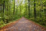 Waldweg im Frühling - 229232460
