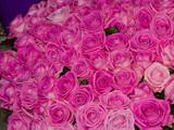 розовые розы, большой букет - 229246893