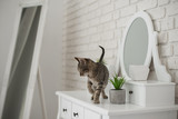 Cute playful kitten posing in bedroom on the dressing table - 229253416