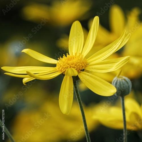 petals in the air - 229272258