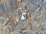 Top view of a broken mussel shell plus pebbles and dried seaweed on a flat rock. - 229284086