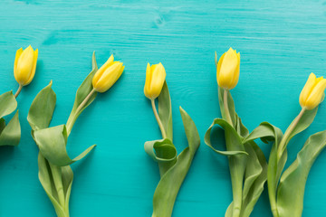 Floristics, holidays and decoration concept - Close-up of yellow tulips lying on blue background