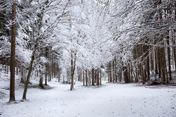 Beautiful winter season snowy forest landscape. © robsonphoto