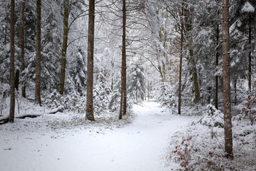 Snowy forest road in winter forest landscape. © robsonphoto