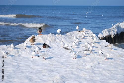 ptaki nad Bałtykiem