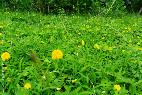Grass and yellow flower - 229328245