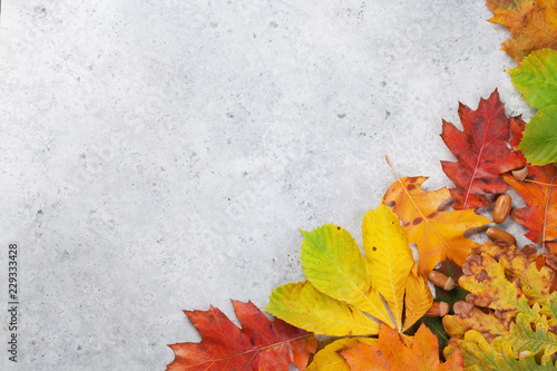 Autumn backdrop with colorful leaves © karandaev