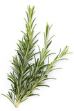 Rosemary spice on the white background. - 229334660