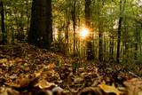 Herbstsonne im Wald - 229341238