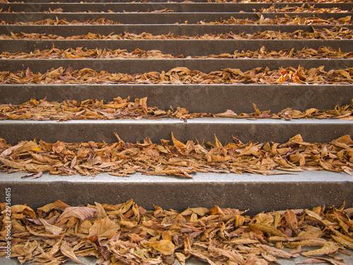 Stufen von einer Treppe bedeckt mit bunten Laub