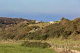 Bovins sur les falaises normandes