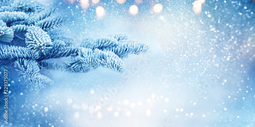 Leinwanddruck Bild Fir branches in blue cold snowy winter