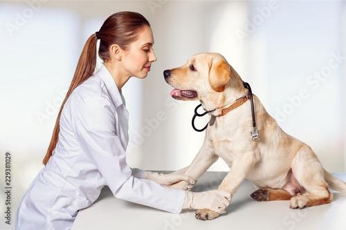 Pet. - 229381029