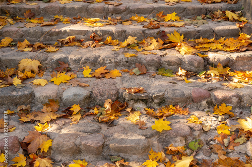 Concrete stairs strewn with fallen leaves