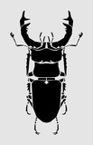 Stag beetle, vector illustration