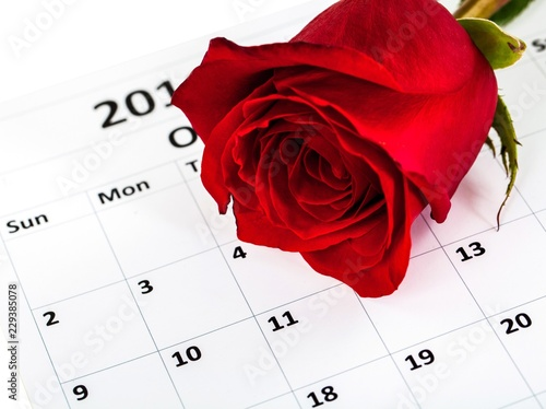 Single rose laying on a calendar