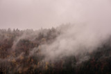 Fog above pine forests. Misty morning view in wet mountain area.  - 229394226