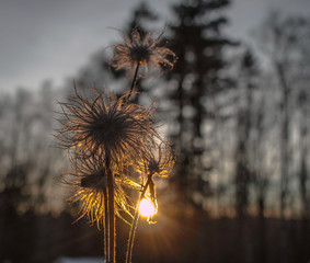 vertrocknete Pflanze wir von Sonnenlicht angestrahlt