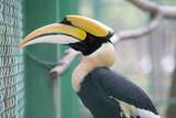 hornbill - 229402044