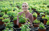Woman controlling quality of Mint plants - 229402238