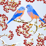 Seamless texture birds Bluebirds  thrush small songbirdon on on snowy tree and berry winter background vintage vector illustration editable hand draw