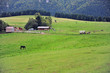 Pastural landscape with horses in Low Tatras national park