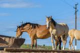 Horses on the farm in the summer.