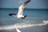 bird, seagull