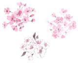 桜 水墨画セット - 229500819