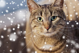pets, winter and domestic animal concept - portrait of tabby cat over snow