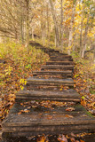 Step Hiking Trail In Autumn Woods