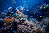 Colorful coral reef with fish and stone