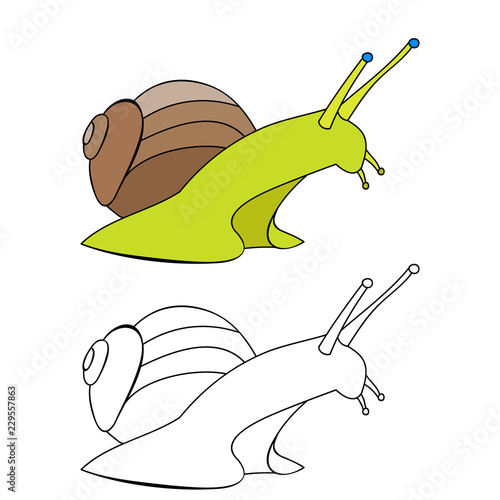 white background snail coloring book, contour