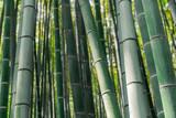 Fototapeta Bambus - Arashiyama Bamboo Forest © Benjamin