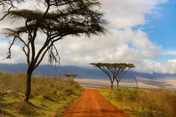 Dirt road to Savannah / African landscape with dirt road to Savannah of the Ngorongoro crater