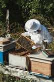 Male beekeeper in protective suite working with beehives and collecting honey. Beekeeping concept. - 229565440